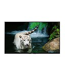 Sony Kdl-43w800d 109 Cm Led Television
