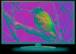 Intex LED-2412 60cm HD Ready LED TV